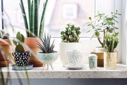 Doniczki – mała dekoracja we wnętrzach