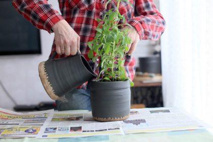 AKCJA BALKON: ziołowo - warzywny ogródek