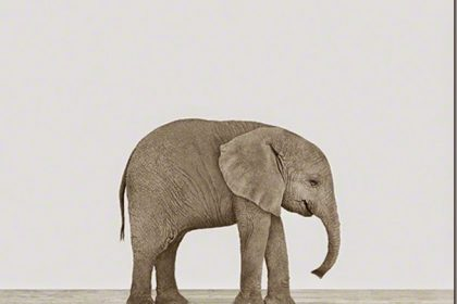 TRENDY W POKOJU DZIECIĘCYM: motyw słonia